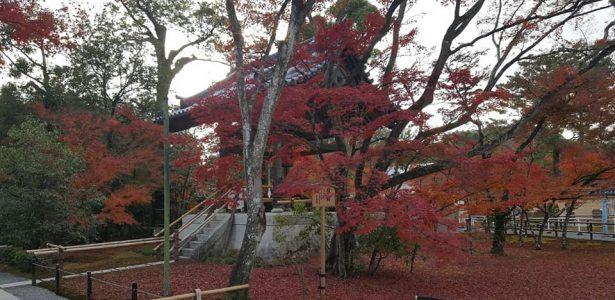 Judo Bu-Sen Tradate e Luino in Giappone